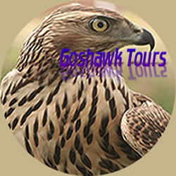 Goshawk Tours